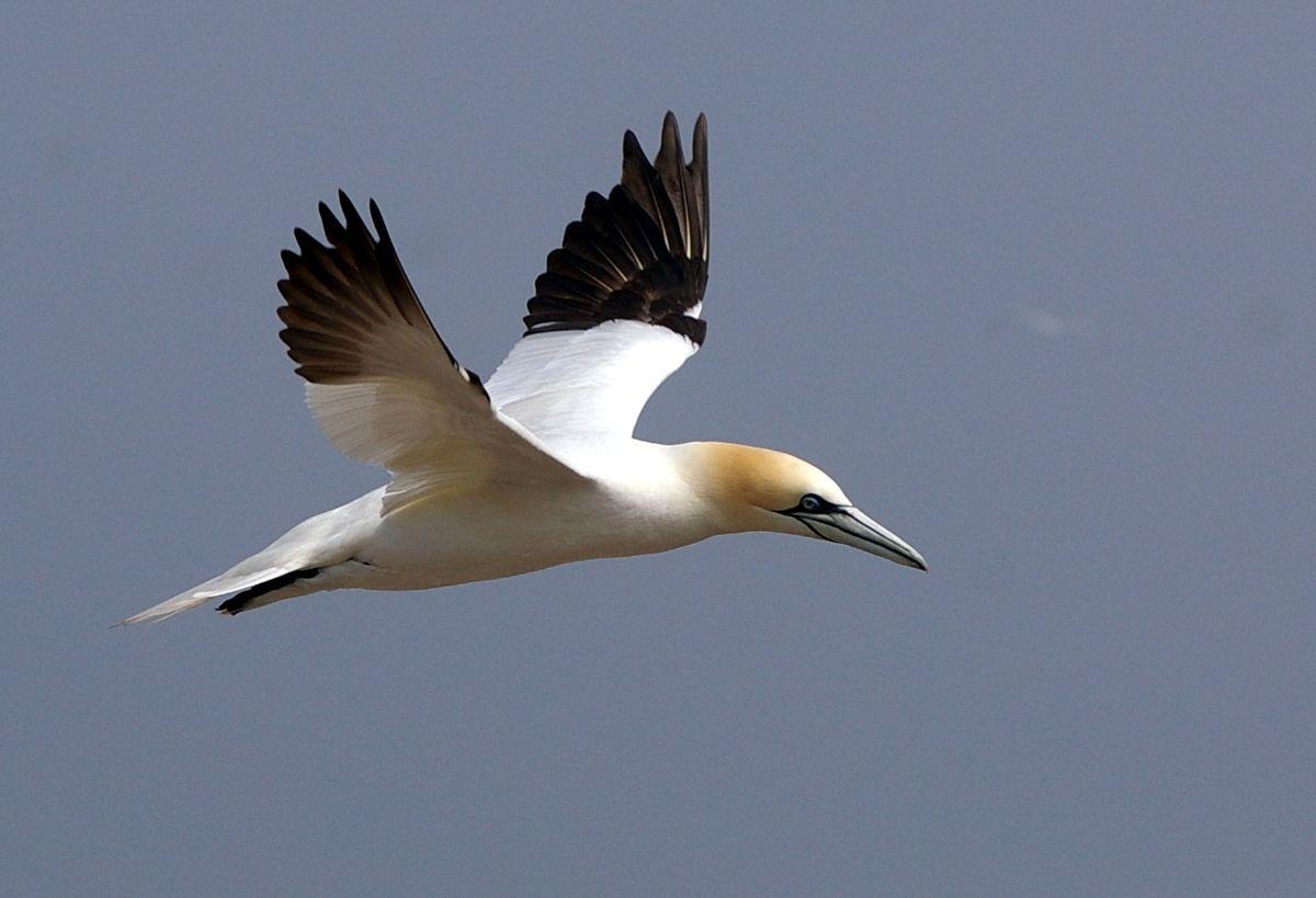 MV Bird