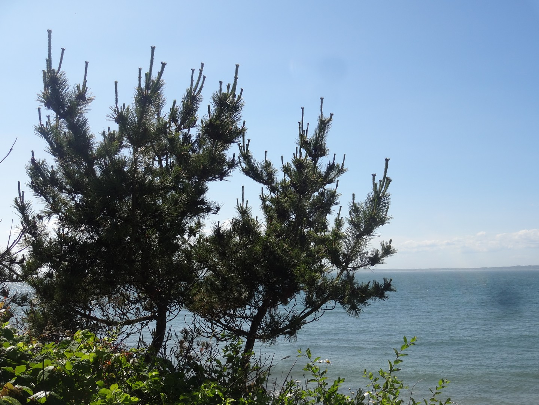 Cedar Tree Neck Sanctuary View