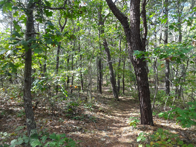 Martha's Vineyard Hiking