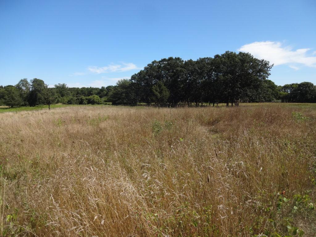Grassland at Pecoy Point