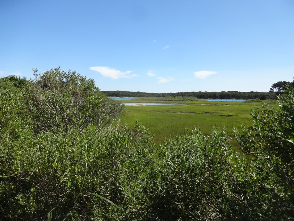 Marshes at Pecoy Point