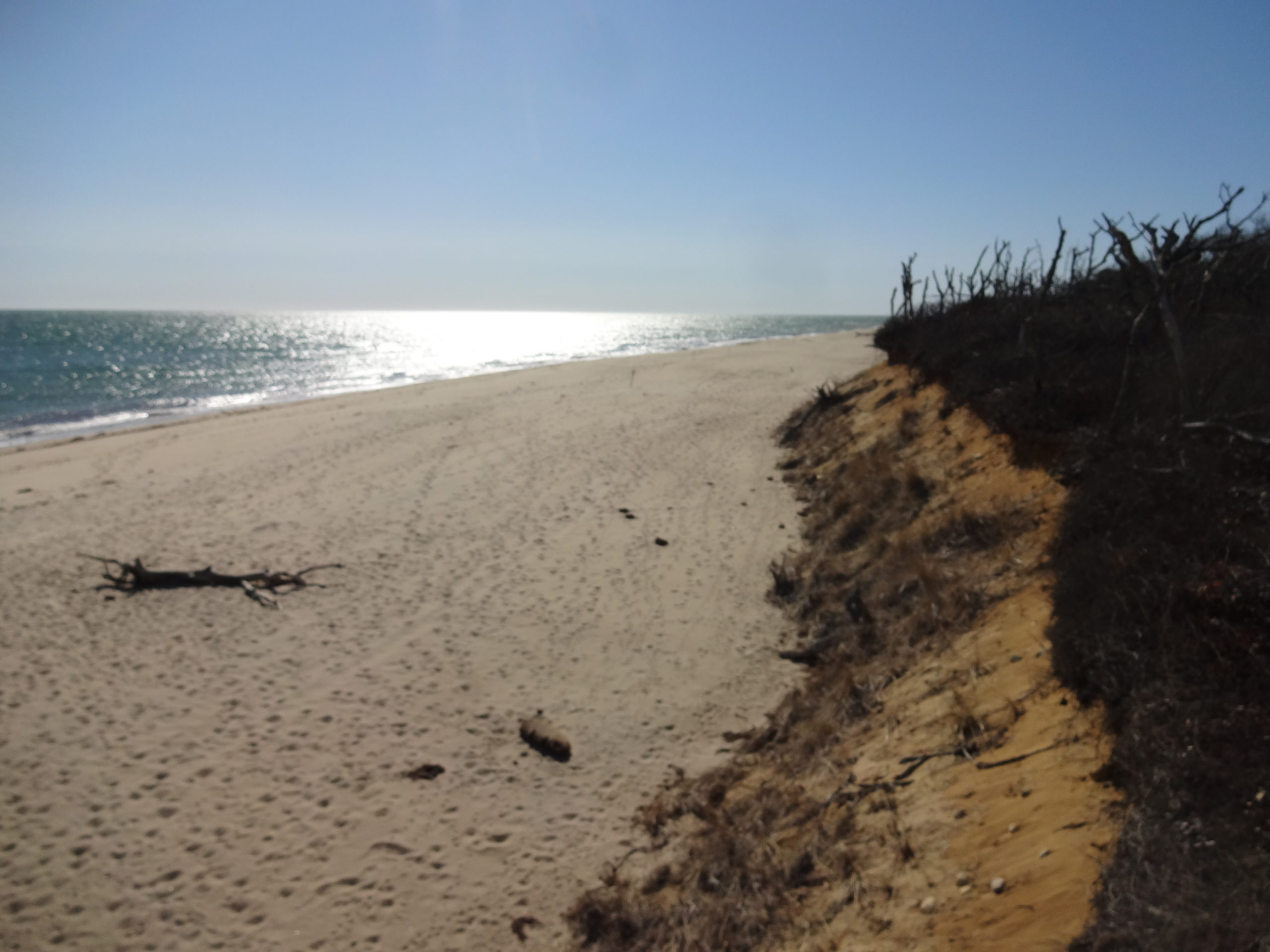 Wasque Beach Looking West