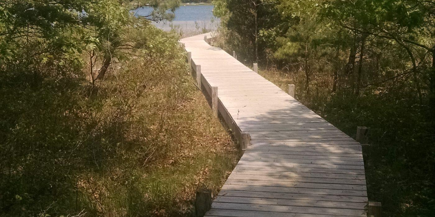 Boardwalk to Hillmans Point